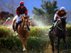 Top UK Horse Racing Festivals